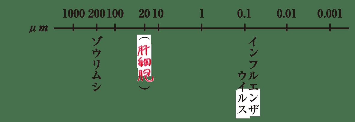 高校 生物基礎 細胞3 ポイント2 答え入りの上図