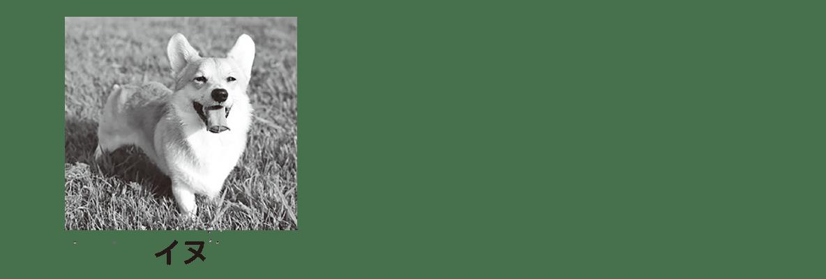 高校 生物基礎 細胞5 ポイント2 イヌの写真のみ