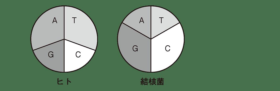 高校 生物基礎 遺伝子4 ポイント3 右側の円グラフ2つのみ