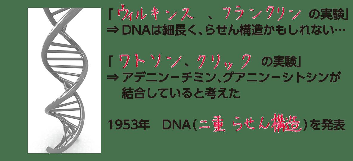 高校 生物基礎 遺伝子5 ポイント1 答え全部