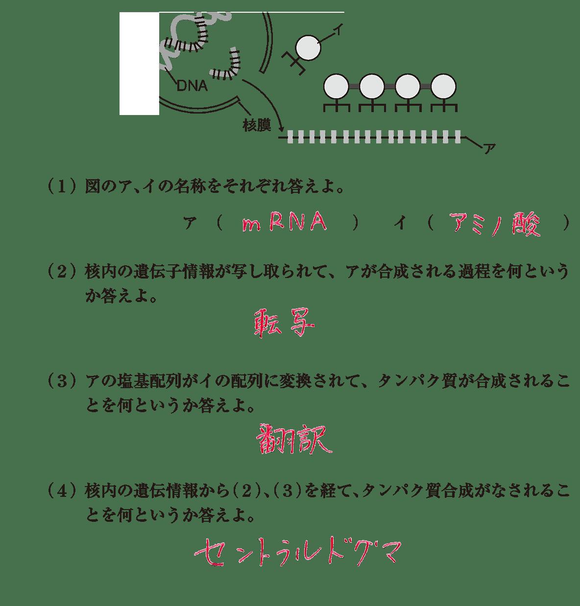 高校 生物基礎 遺伝子9 演習3 答え全部