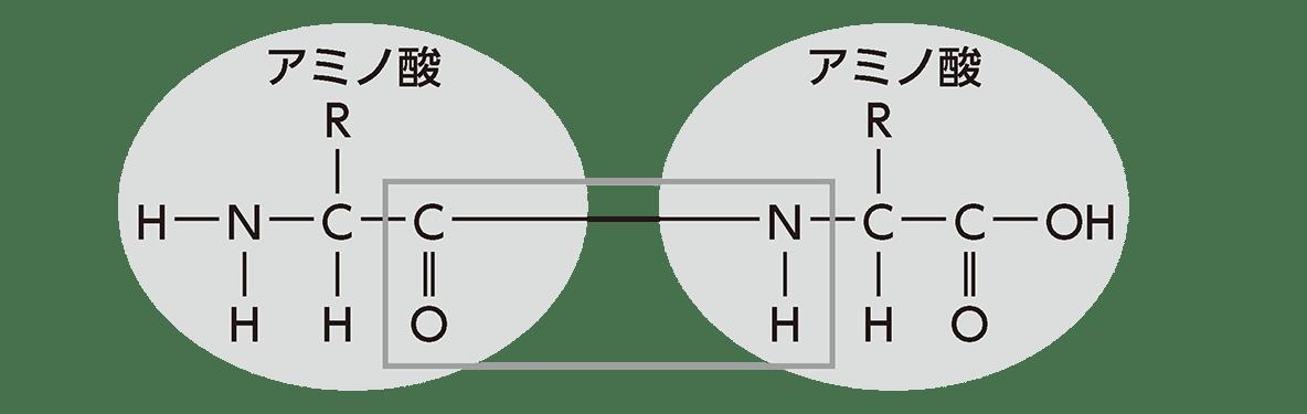 高校 生物基礎 遺伝子11 ポイント2 ペプチド結合の図