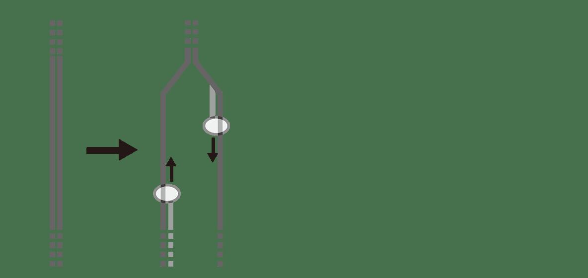 高校 生物基礎 遺伝子15 ポイント2 図の左から2番目まで