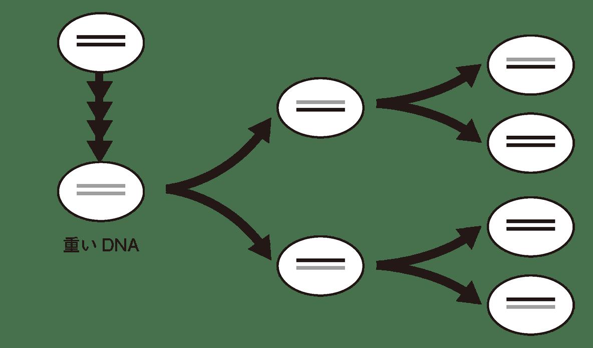 高校 生物基礎 遺伝子1 ポイント1 図のみ