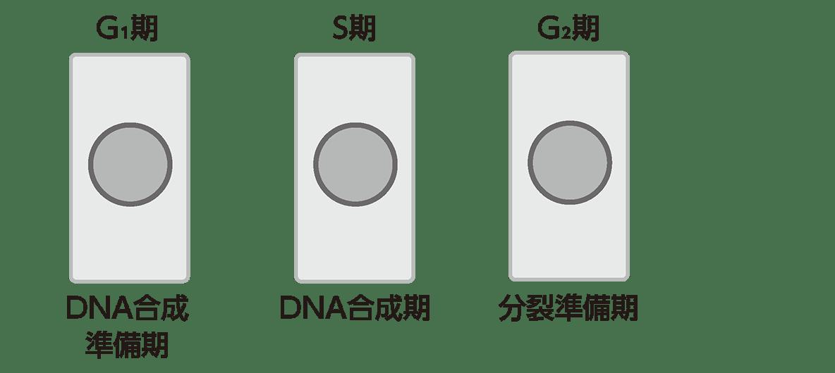 高校 生物基礎 遺伝子18ポイント1 図のみ
