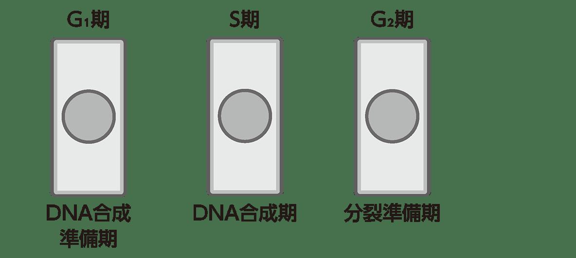 高校 生物基礎 遺伝子19 ポイント1 図のみ