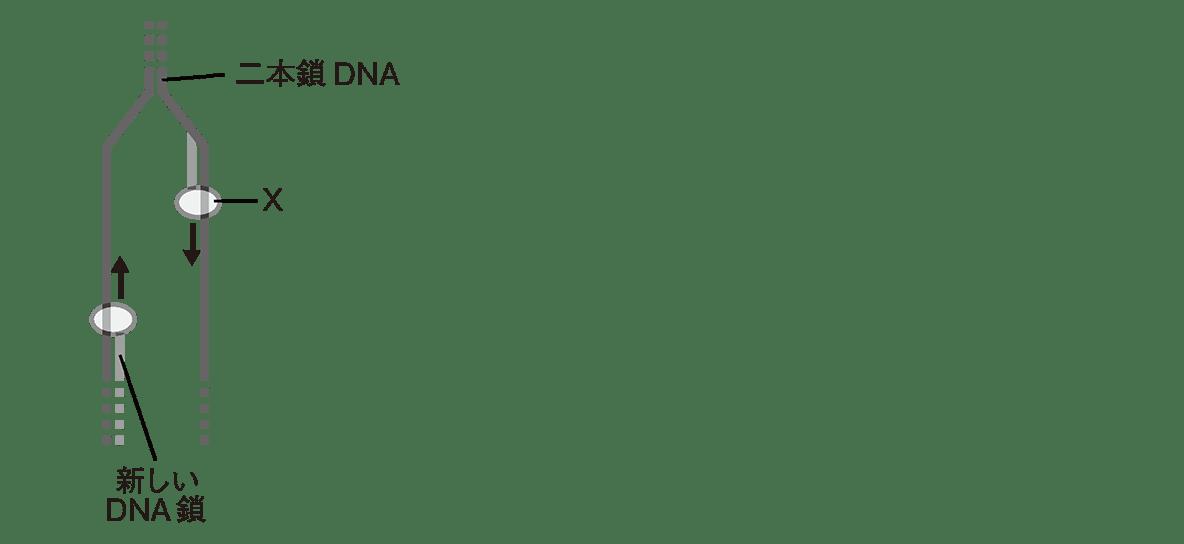 高校 生物基礎 遺伝子22 演習3 図