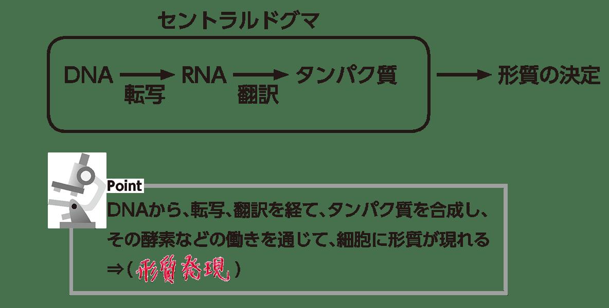 高校 生物基礎 遺伝子27 ポイント1 答え全部