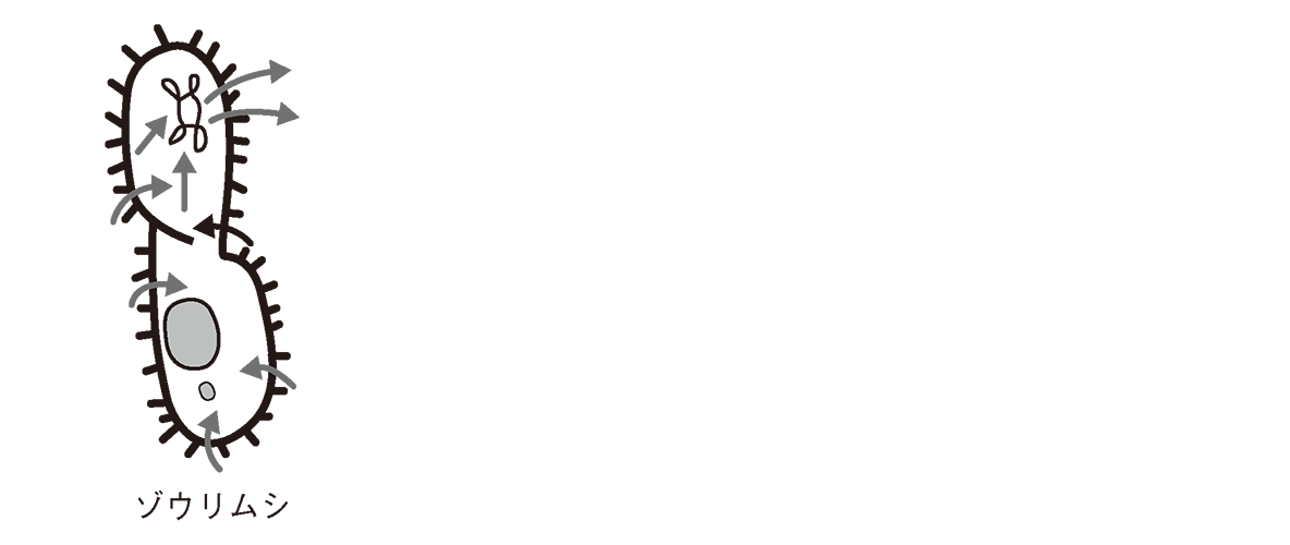 高校 生物基礎 体内環境の維持28 ポイント3 一番左のゾウリムシの図のみ