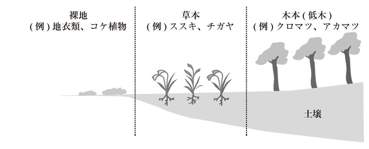 高校 生物基礎 生物の多様性3 ポイント2 ポイント除く (復習のため前の図を使っています)
