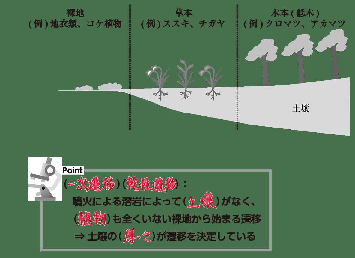 高校 生物基礎 生物の多様性3 ポイント2 全て埋める(前回の授業の図です)