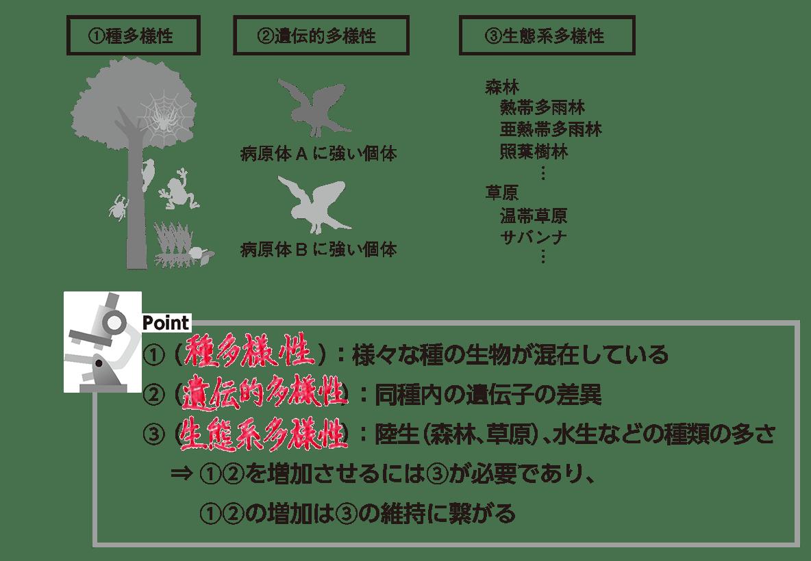 高校 生物基礎 生態系21 ポイント2