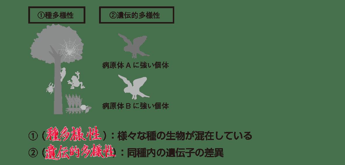 高校 生物基礎 生態系21 ポイント2 左・中の図と、ポイントの1~2行目