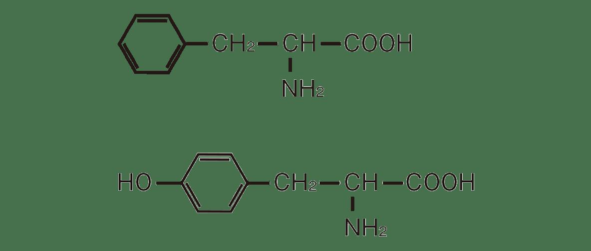 高校 化学 6章 2節 22 1 図の構造式のみ、「フェニルアラニン」や「チロシン」は不要