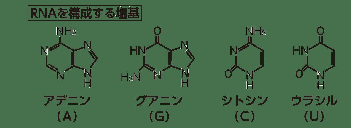 高校 化学 6章 2節 36 1 「RNAを構成する塩基」の図のみ