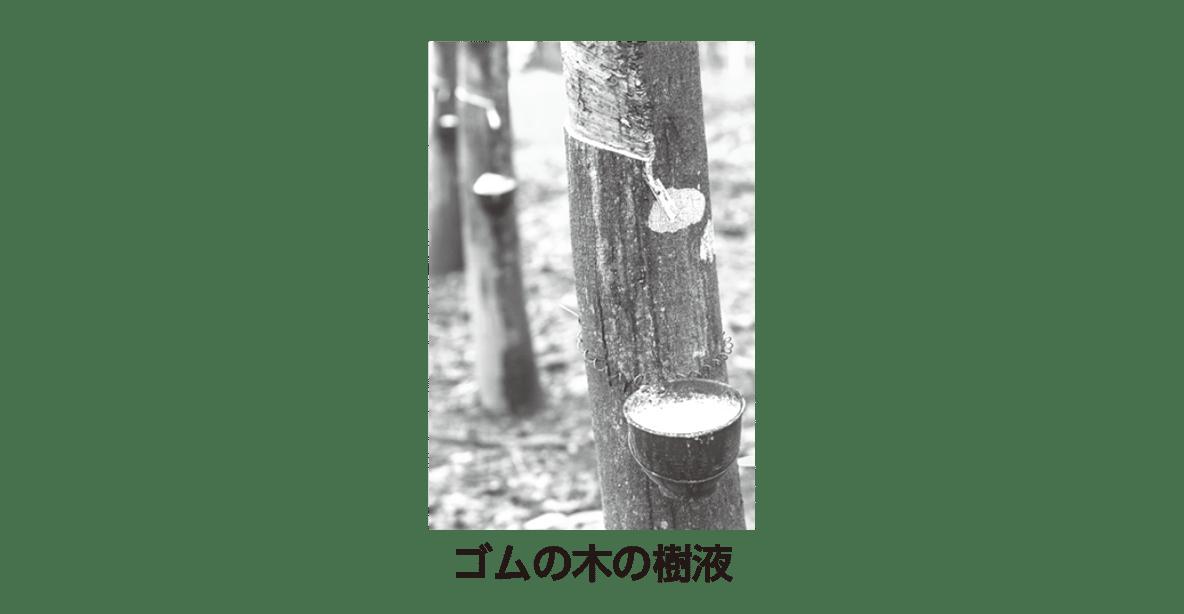 高校 化学 6章 3節 46 1 ポイント1のゴムの木の写真のみ