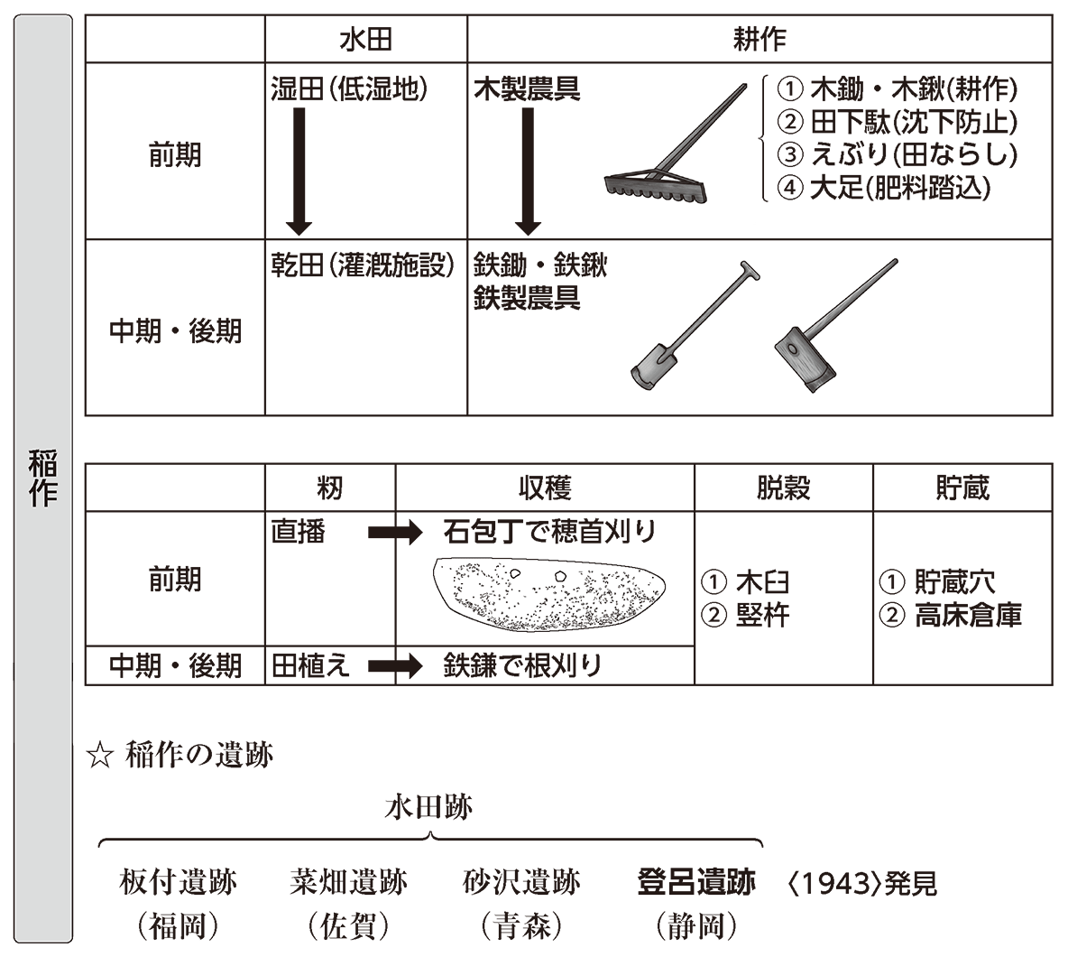 弥生文化1 ポイント2 稲作