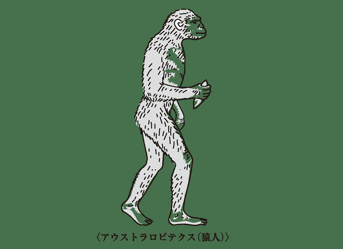 高校世界史 先史時代1 ポイント1 左側の猿人イラストのみ/右側テキスト不要
