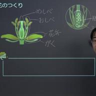植物の花のつくり