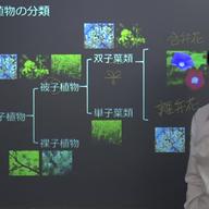 植物の分類