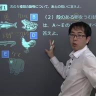 動物の分類と進化