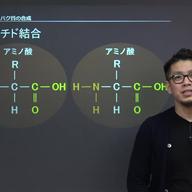 タンパク質の合成と働き