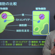 細胞の構造の問題