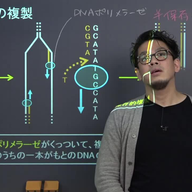 DNAの複製と細胞分裂