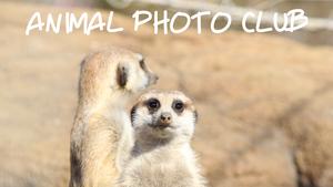 動物写真サークル