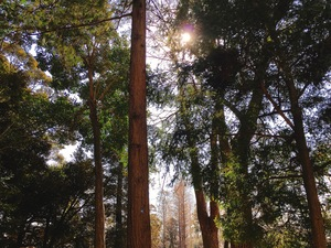 🌿👟森林浴会👟🌿