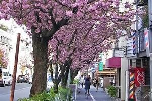 桜新町に出会いを求めるのは間違っているだろうか