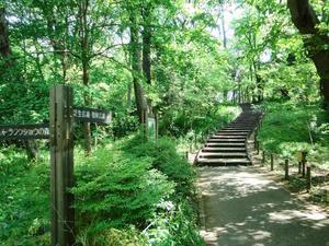 ✨🌿誰でも参加歓迎!林試の森公園で森林浴会🌿✨