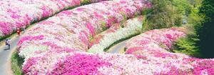 【6月22日】イコイコ生駒山deアジサイ祭りからの~ピザ体験(o'ω'o)モキュ