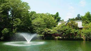 ✨🌿誰でも参加歓迎!井の頭公園森林浴会🌿✨