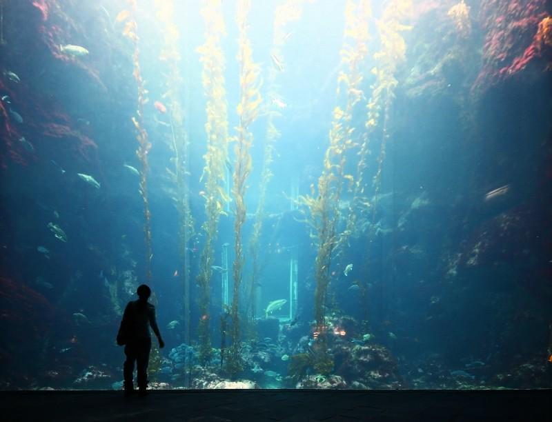 擁有台灣水域館、珊瑚王國館以及世界水域館三大區塊的屏東海生館,裡頭擁有數個十足巨大的魚池水族箱,初來乍到感受相當壯觀。