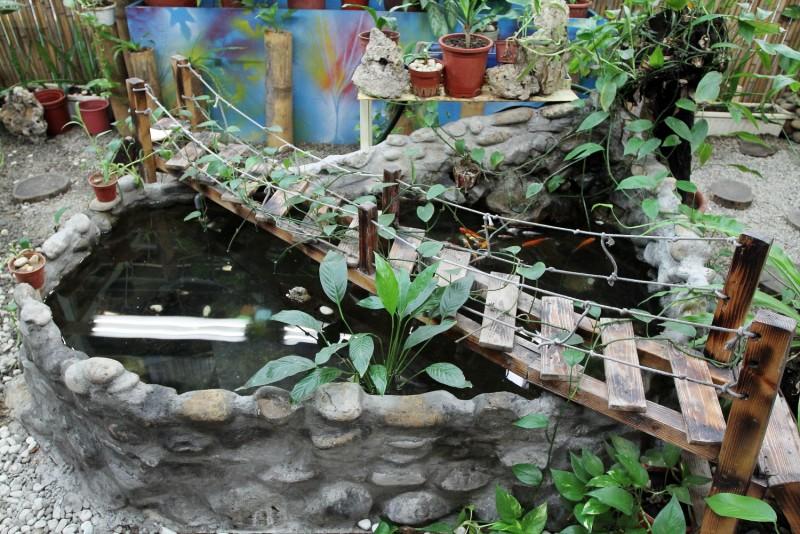 其中還有小型生態池