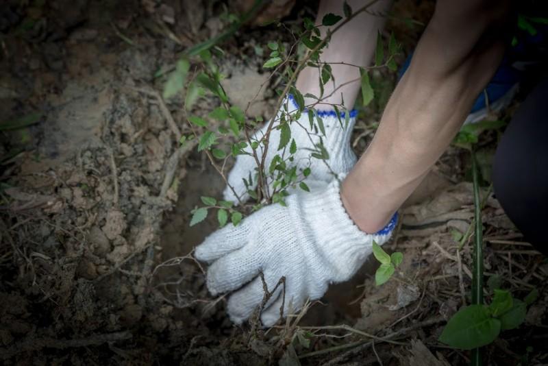 「Mercedes福爾摩沙森林」,預計於園區內種植超過10,000棵以上的台灣原生樹,將可保護近15,000種台灣物種。