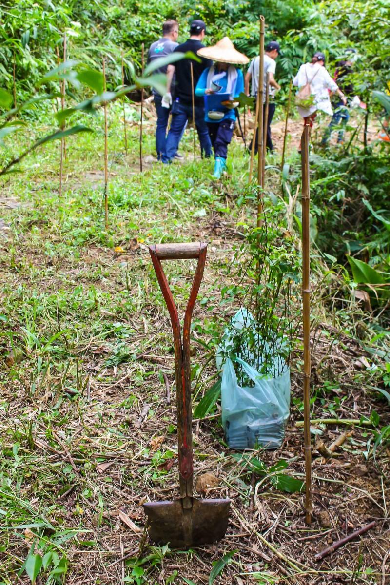 每一支竹竿旁都將種下一株樹苗