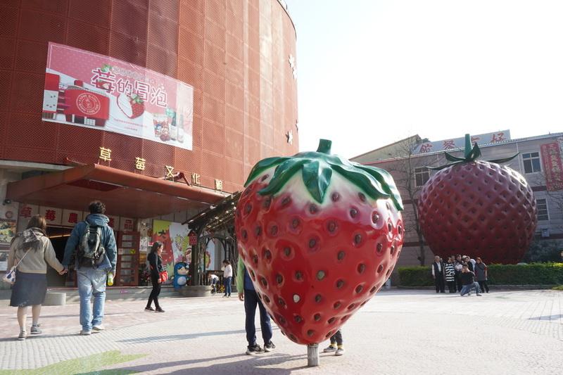 過年期間正好是草莓產季,到苗栗當然要來大湖採個草莓阿