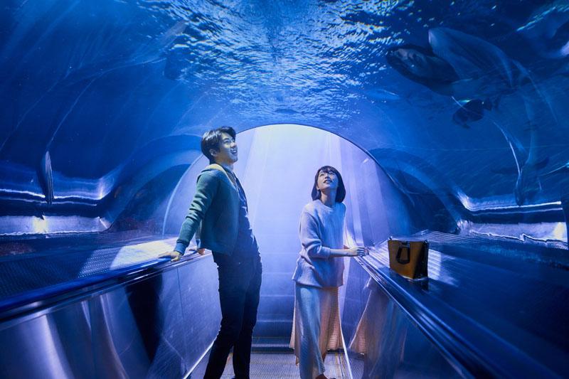 《你的情歌》傅孟柏、柯佳嬿花蓮海洋公園「海底約會」超浪漫。
