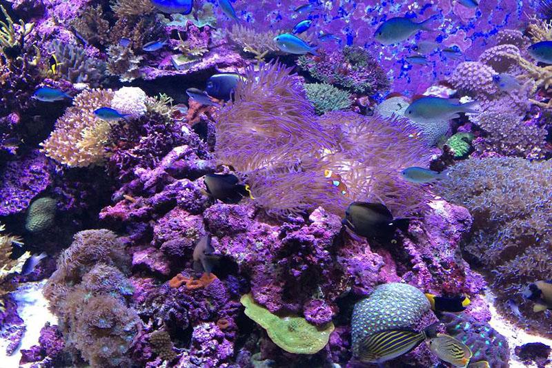 澳洲大堡礁的珊瑚一景