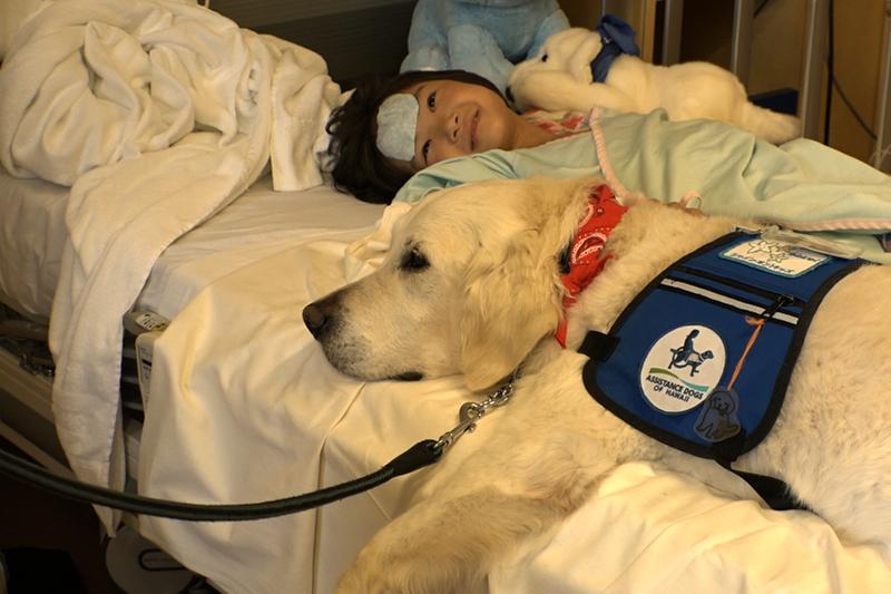 【圖一】治療犬貝利趴在小結身旁,給予她陪伴