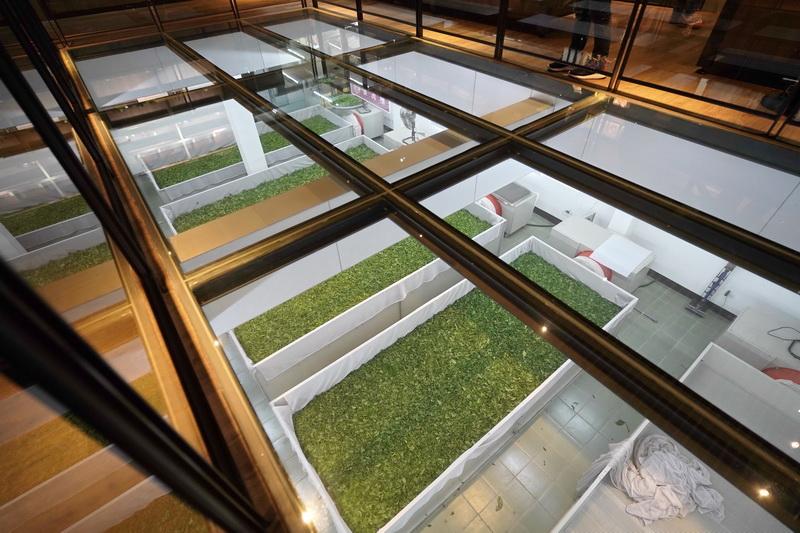 二樓的中央走道設計為透明的玻璃天井,讓遊客透過由上而下的視角觀賞整個製茶過程