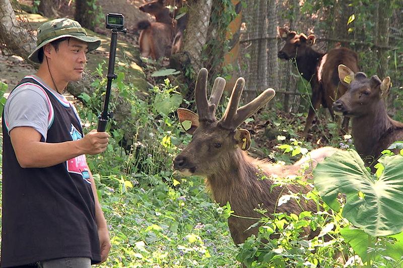 由於水鹿容易受到驚嚇,《台灣第一等》竇智孔靈機一動,運用小時候玩「一、二、三,木頭人」的遊戲技巧悄悄接近水鹿。