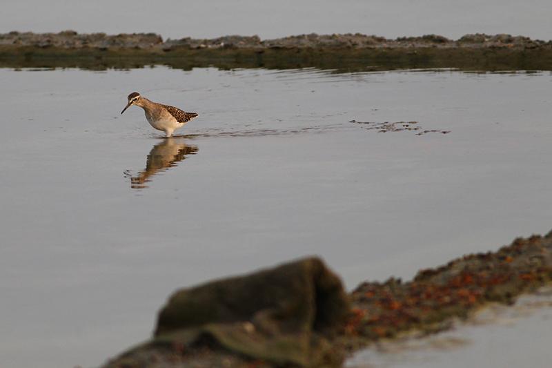 潟湖地形造就台江地區豐富的水鳥生態,堪稱愛鳥人士天堂。