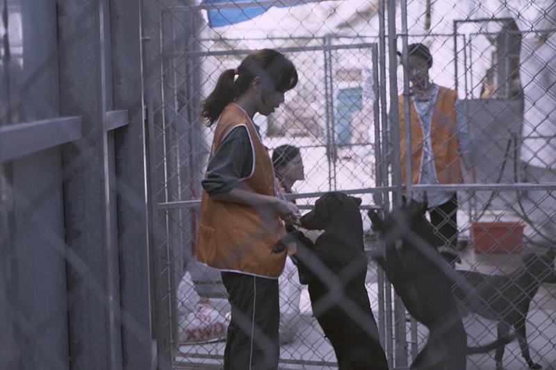 【車勢星聞】《十二夜2》深入流浪動物收容機構紀錄現況。/牽猴子提供