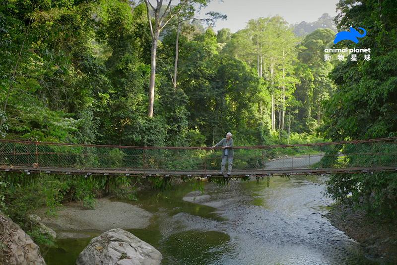 朱蒂丹契深入東南亞婆羅洲的原始熱帶雨林,也是地球上最古老的熱帶雨林,這裡未經砍伐,沒有打獵活動,也沒有聚落。