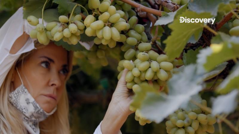 伊蓮在葡萄園打工6小時賺得78美元,換來一周生活所需。(圖:Discovery提供)
