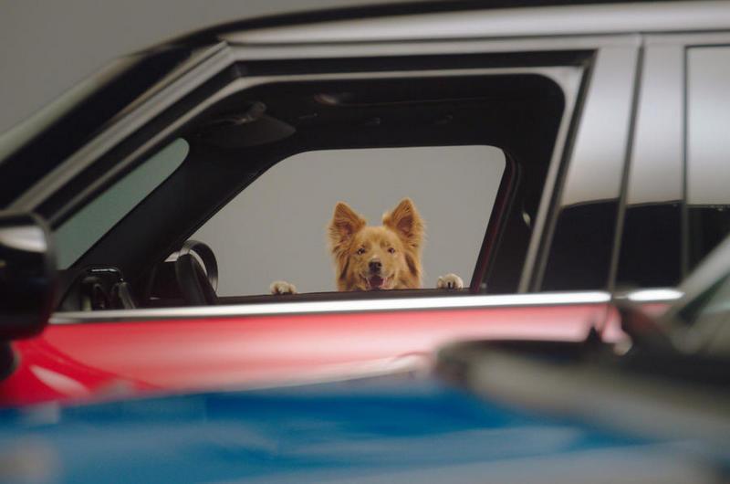 Mini與英國Dogs Trust狗福利機構合作推廣狗安全旅行。