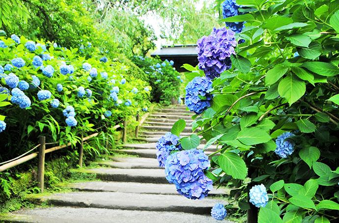 季節の花祭壇 紫陽花 小径
